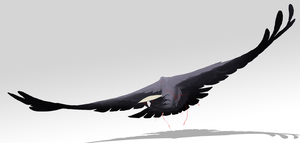 harpy by oukamiyoukai45