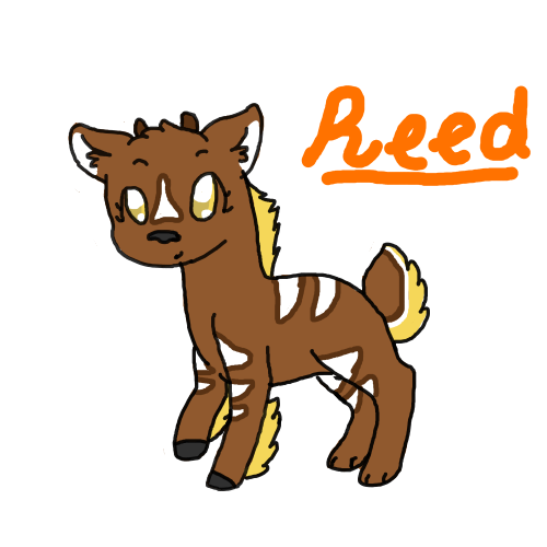Reed by Spawawa