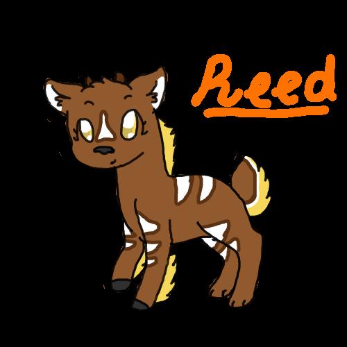 Reed by Spawawa