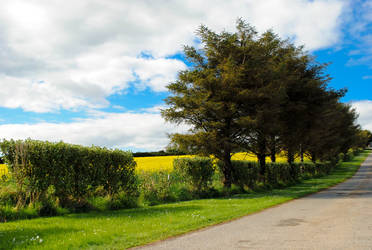 the road by bethdu