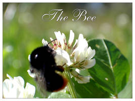 The Bee by s-w