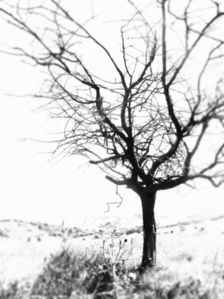the tree from my dream by sl-0
