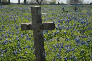 Bluebonnet Cemetery 2