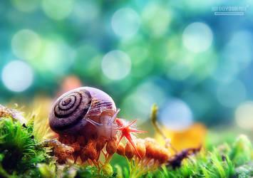 The moss life by UgurDoyduk