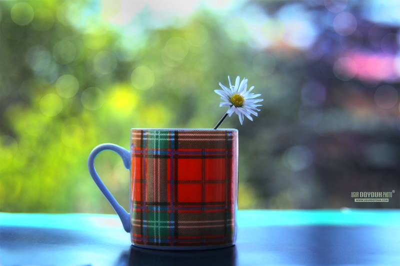 Plaid cup by UgurDoyduk