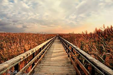 The Bridge to Nowhere by UgurDoyduk