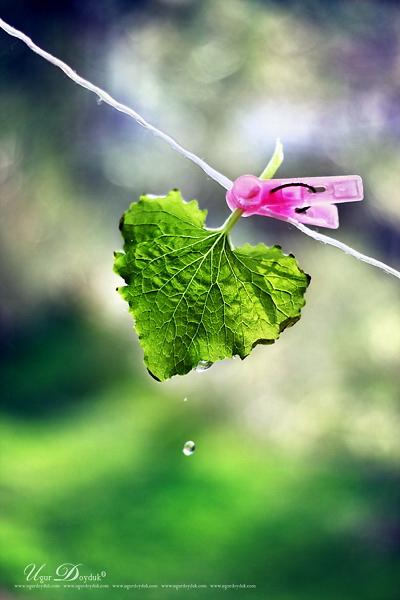 It's me , Spring by UgurDoyduk
