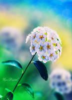 Vanilla Twilight by UgurDoyduk