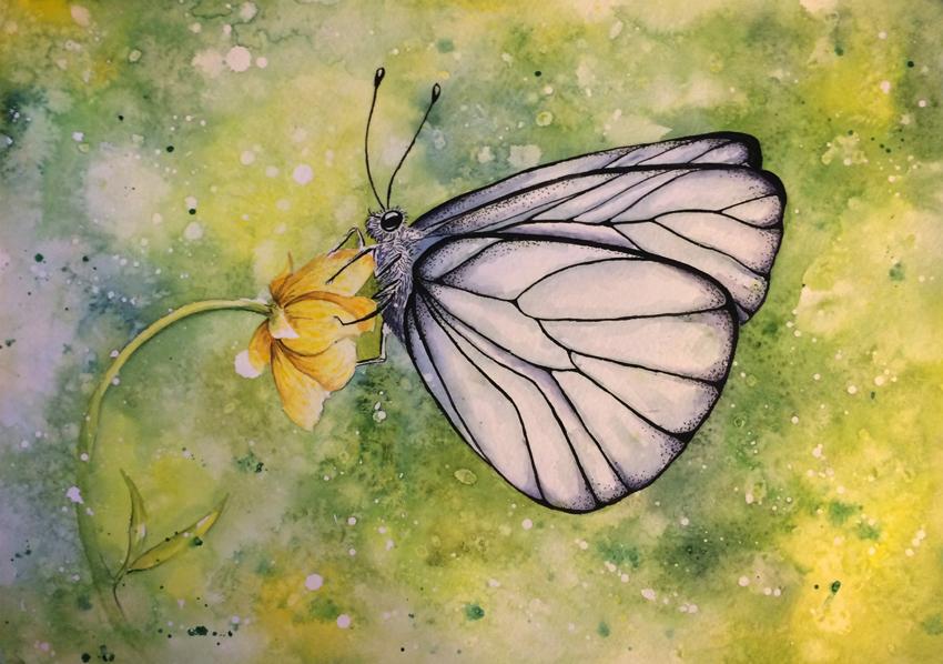butterfly by qi-art