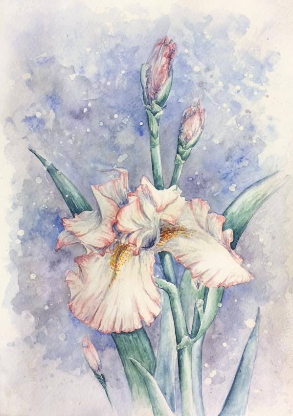 Iris by qi-art