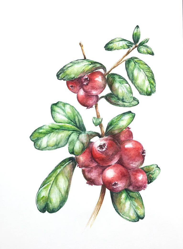 lingonberry by qi-art