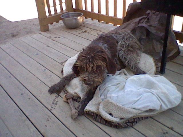 Scruffy on his bed by DarkMageVarja