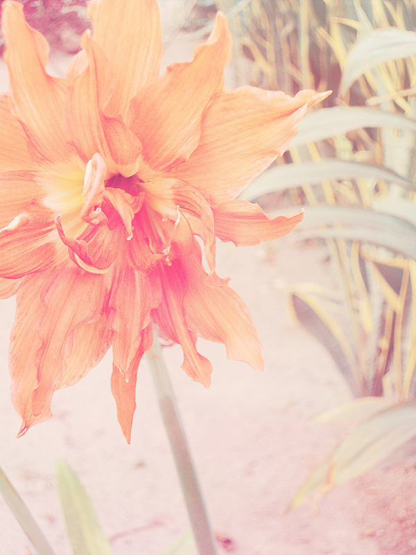 Orangish by crackedbliss
