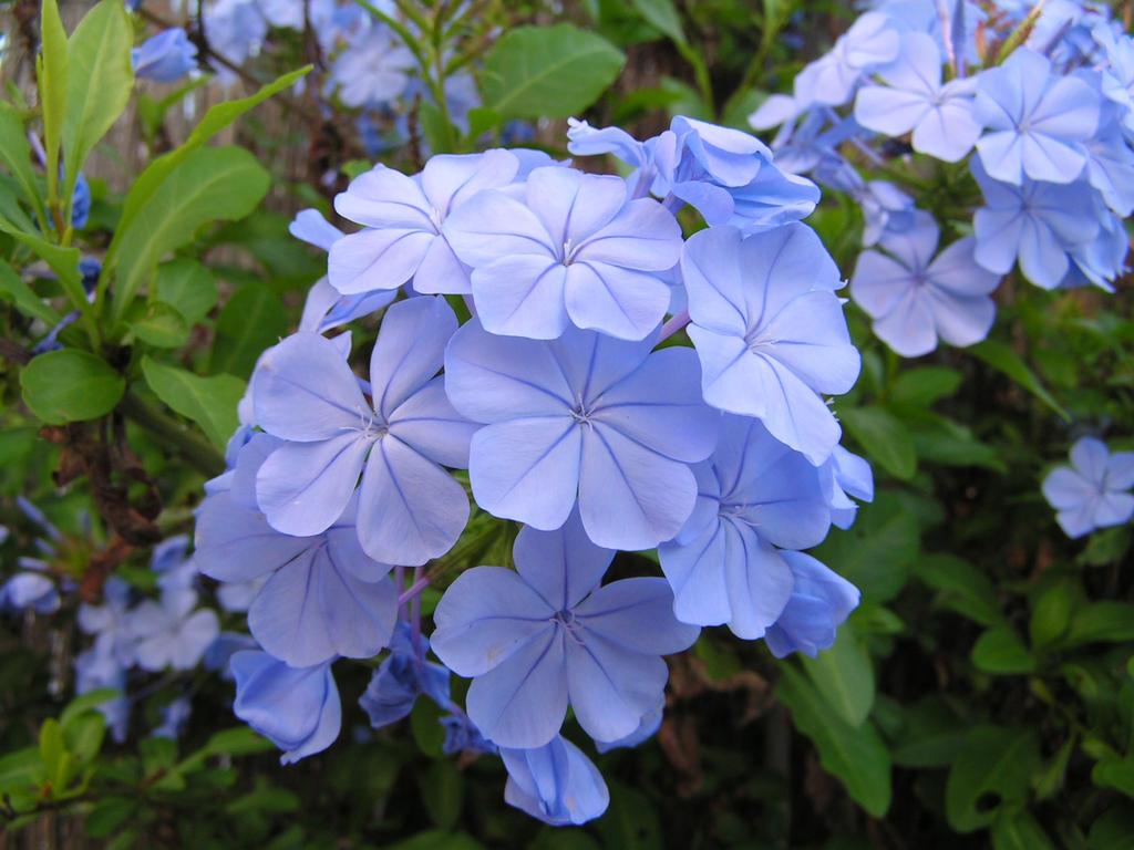 Light blue flower by anastasia0512 on deviantart light blue flower by anastasia0512 izmirmasajfo