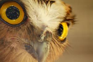 Eyes by maabbus