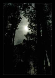 midnightforrest by enthr0n3