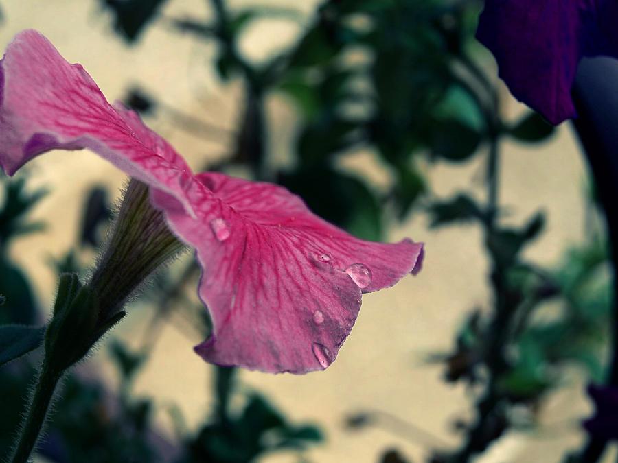 rain drop by sylvesterSD