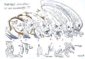 prometheus fanart  xenomorph evolution by t-rex79