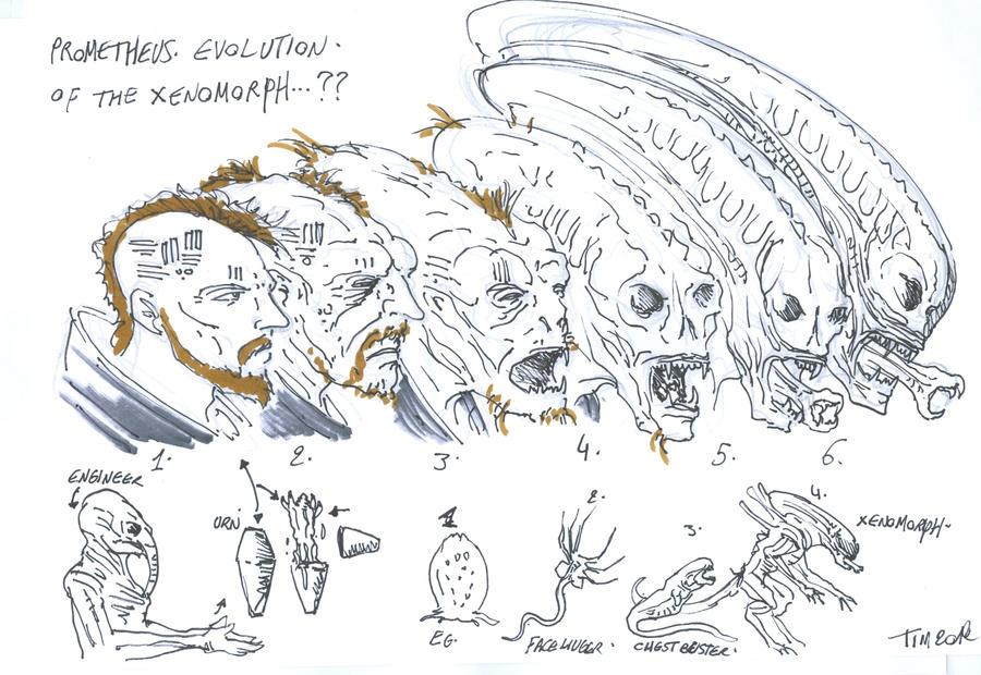 prometheus fanart xenomorph evolution by t-rex79 on DeviantArt