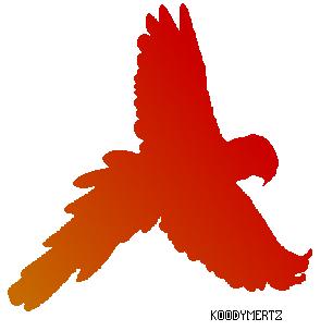 Bird by Koodymertz