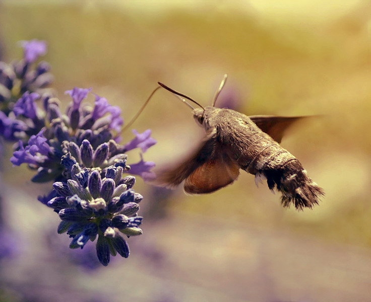 like a hummingbird by Aeylan