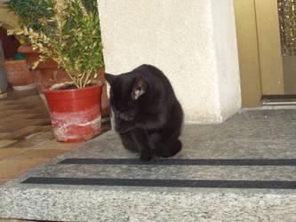 my other black cat melwyn by InvaderLoveless