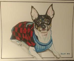 dans dog by jamesrolfe932