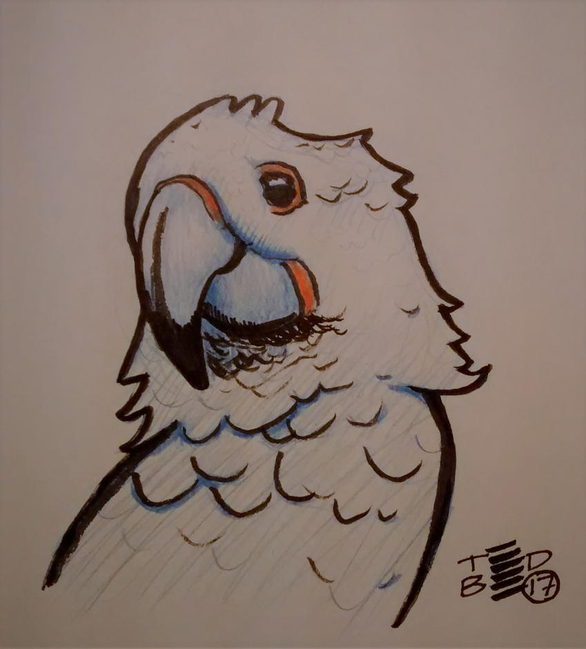 Parrot sketch by tedbergeron