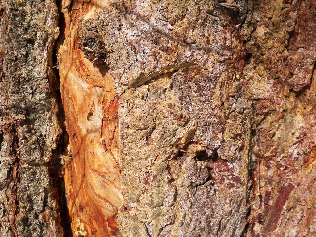 Wood Texture 1 by DasSilberDrachen