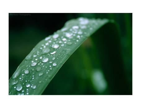 ..:: Simple Drops ::..
