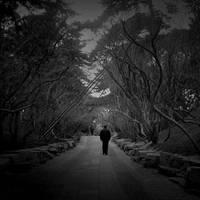 I Walk Alone by AtomicBrownie