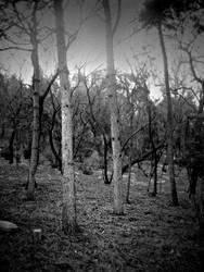 Barren Winter by AtomicBrownie