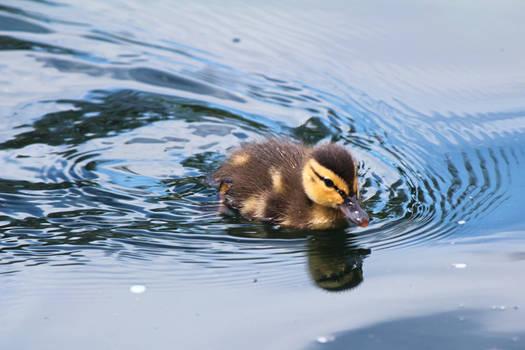 Duckstroke