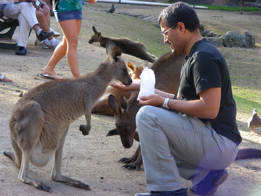 Feeding Kangaroos by AtomicBrownie