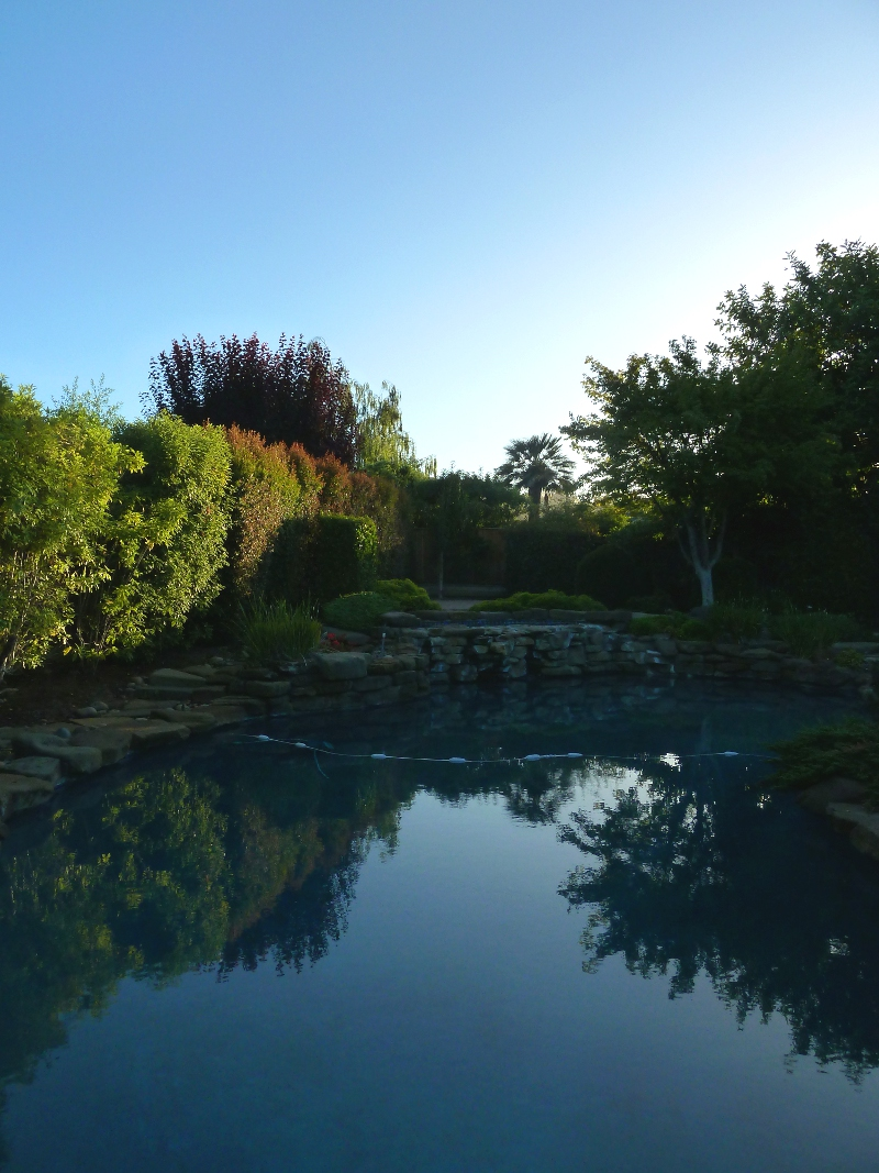 Garden and Pool by AtomicBrownie