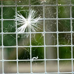 Fuzz on the Fence by AtomicBrownie