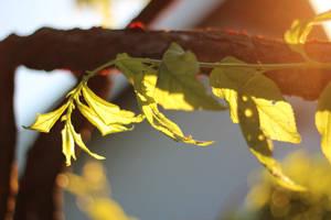 Warm Tree by AtomicBrownie