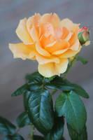 Tangerine Top by AtomicBrownie