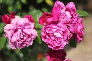 Crinkled Pink by AtomicBrownie