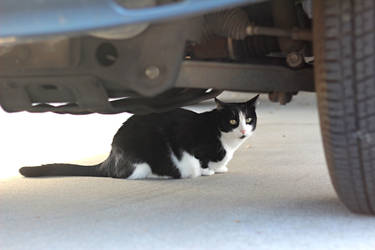 Under the Auto