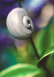 Snail - version 1 by yoguy108