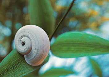 Snail - version 3 by yoguy108
