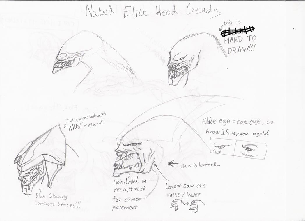 elite head study by xalener