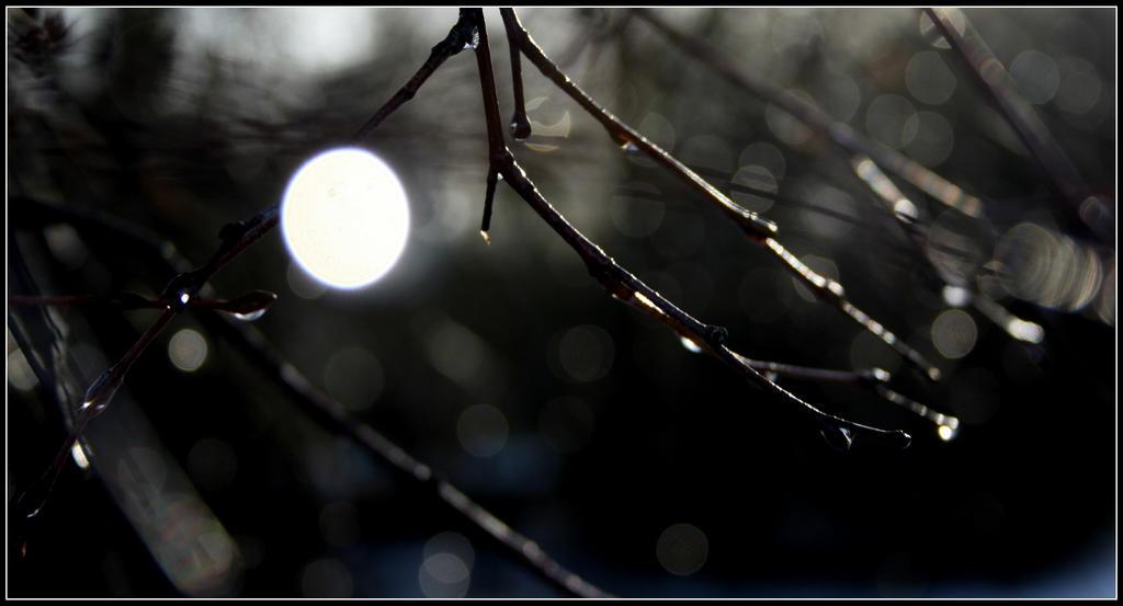 light by saffi9