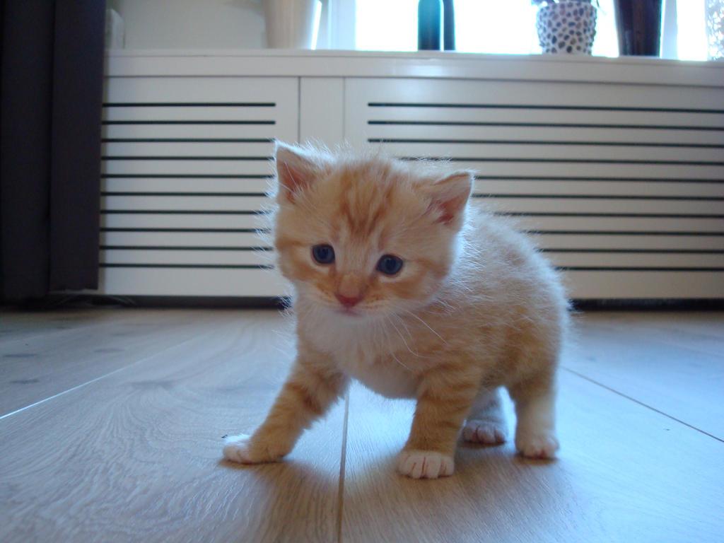 My kitten: 'Schaapje'