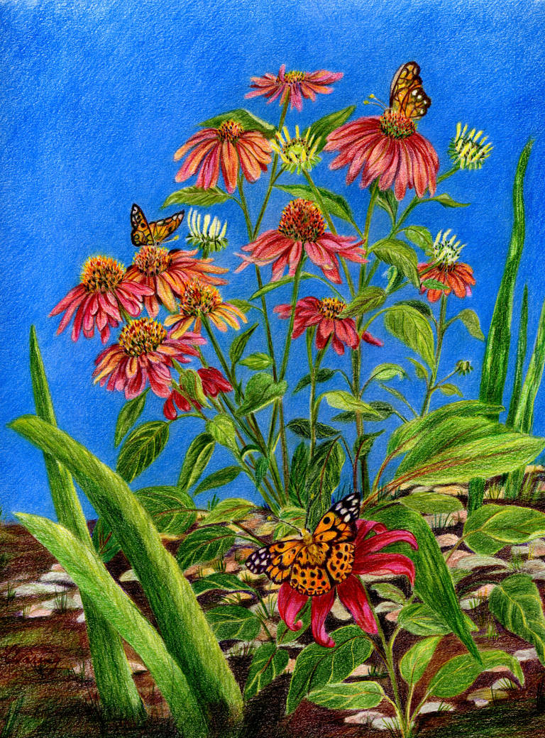 Coneflowers with American Lady Butterflies