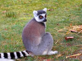Lemur - 23 by Delragon
