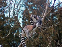 Lemur - 22 by Delragon