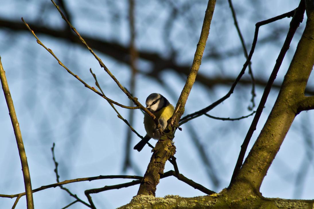 Hidden Warbler by Preachman