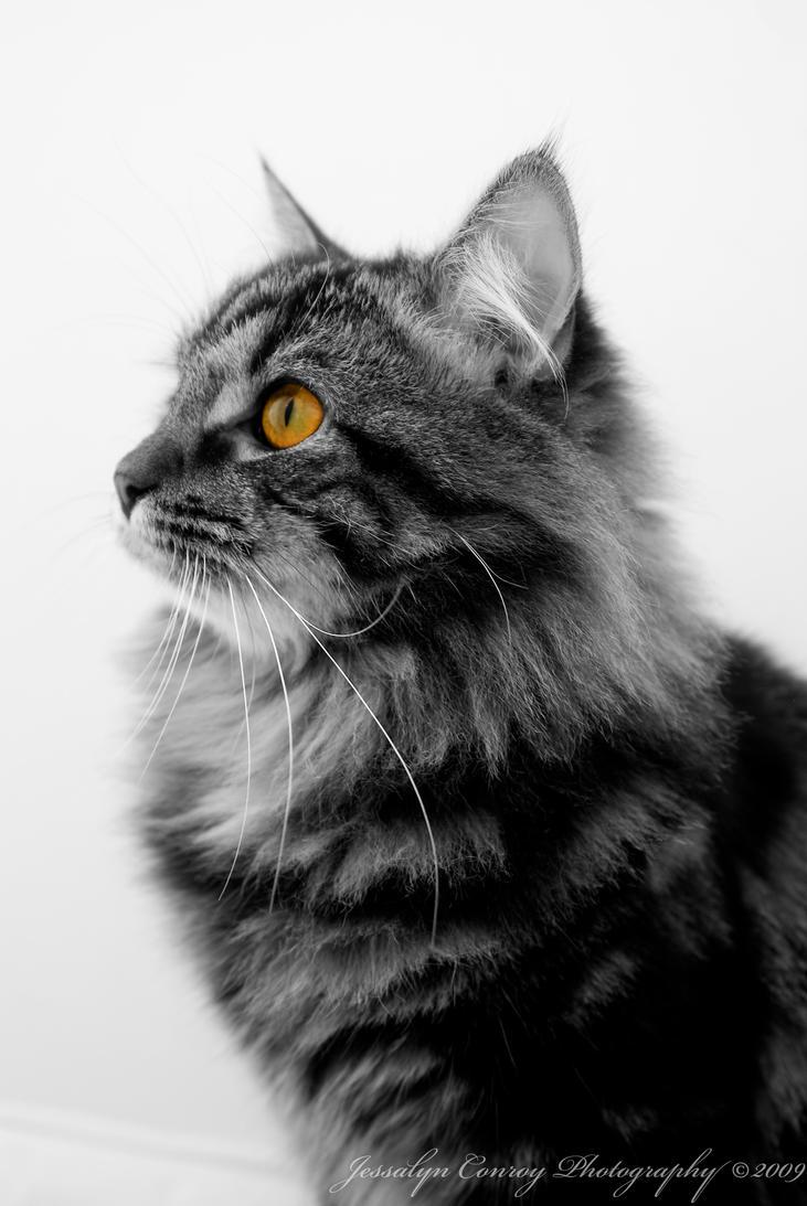 Dark Hazel Cat Eyes